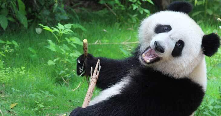 google-panda-algoritma